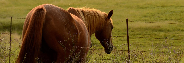 CE Equine